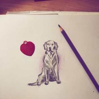 A lil golden doge by christiee61