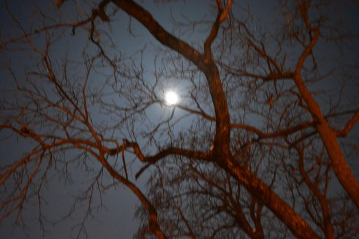 Moontree by ThisLonelyHeart