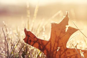 Fall's remains by DillonStein
