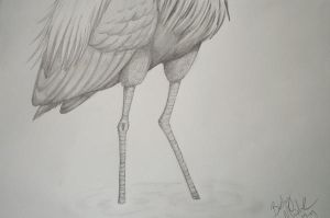 Purple Heron leg detail by MaryOfExeter