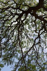 a silhouette of tree branches by Dancing-Treefrog