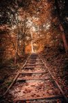 Forgotten Path by AnthonyPresley