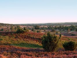 STOCK Heathland by Inilein