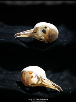 Bird Skulls Stock 11 by emothic-stock