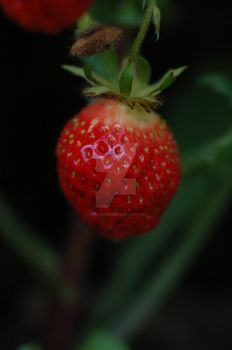 Stawberry by lifeismybeat
