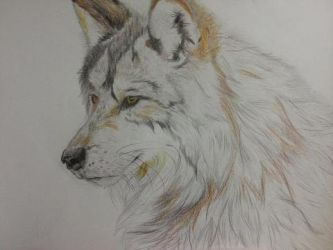 Wolf by AnnaGrimm
