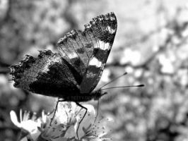 Wings of a butterfly by Tetty