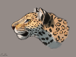Leopard Study Aaron Blaise Tutorial (Finished) by CalebP1716