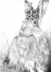 Queen Jack: Portrait of a House Hare by katpatterson