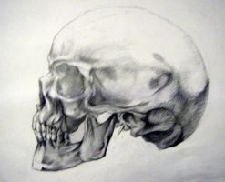 Skull-anatomy by Renchee