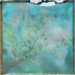 Solarized -Flowers- by jrgee