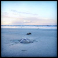Sand and shells for Elisa by Renoux
