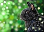 bunny, digital painting by LeontinevanVliet
