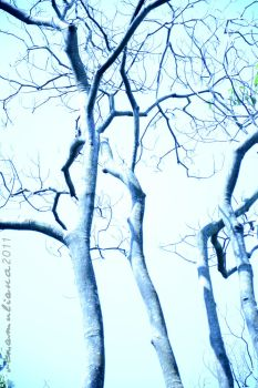 Blue Branches by thinkaboutanything