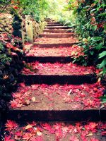 Red Steps by Sept-Lapins-Rouge
