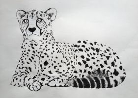 Cheetah by Pepples93