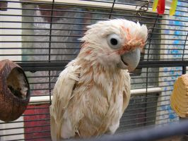 wet parrot stock1 by violetsusan