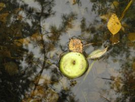 Apple in pond by jeannemoon