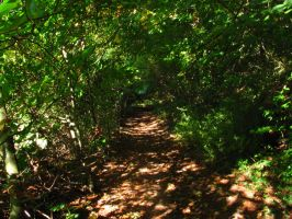 Path into the woods by Rylius