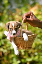 Easter Pup by PatriciaVazquez