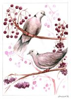 Dove pair 1 by Borianna