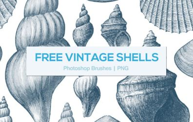 Vintage Shells Photoshop Brushes by melemel