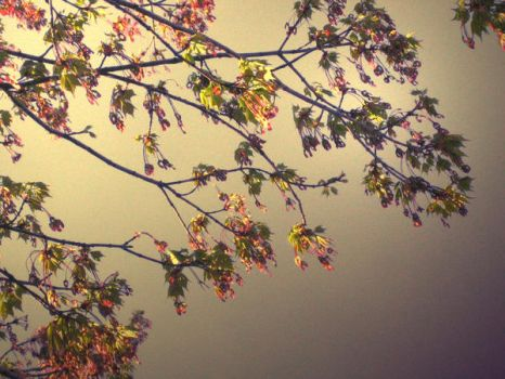 Tree in the sky by ChaRLunE