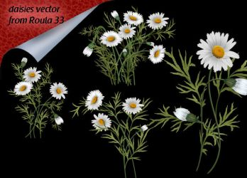 Daisies Vector by roula33