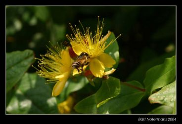 Bee 2 by bartje-