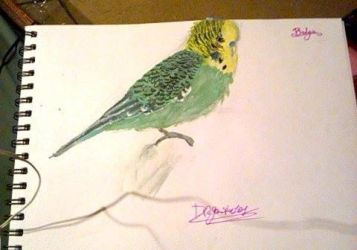 Budgie by Dragonspice101