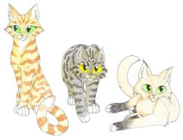ThunderClan Cats by CaptainMorwen