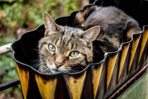 Muci's Flower Planter Box by Kitteh-Pawz