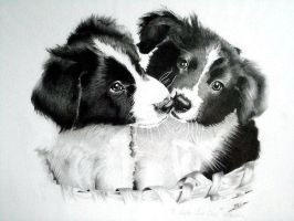 Puppies by Cr1msonCloud