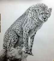cheetah - work in progress step 5 by daniluc78