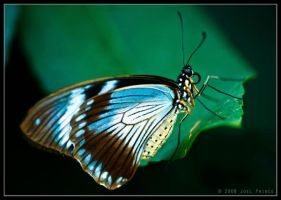 Butterfly 28-128 by Prince-Photography