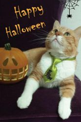 Halloween-Cat by KNBcreative
