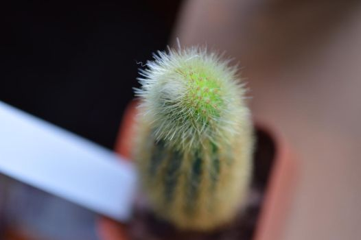 cactus. by Equide--Designs