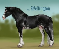 Wellington conformation by sealle