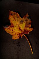 Leaves 011 by ISOStock