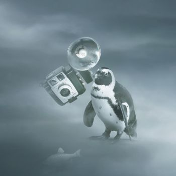 Antarctic detective - Every camera have own bird V by AmandineVanRay