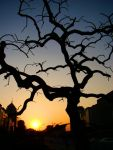 Crooked Tree Sunset by SniperOfSiberia