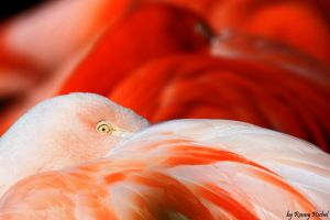 Flamingos by lokinst