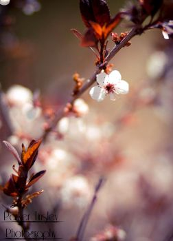 Blossom by parkertinsley