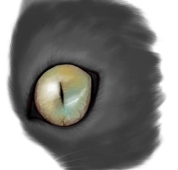 Eye cat by Miru8D