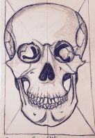 The Human Skull by Andailite47