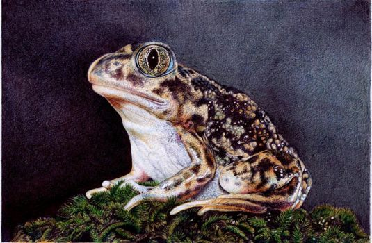 Sitting Toad - Bic Ballpoint Pen by VianaArts