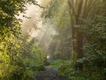 entry into the fairytale forest by StefanPrech