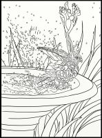 Page 9 of Australian Birds Adult Coloring Book by LorraineKelly