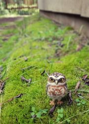 Hand Needle Felted Burrowing Owl soft sculpture by amber-rose-creations