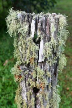 Lichen covered fence post - Montville by wildplaces